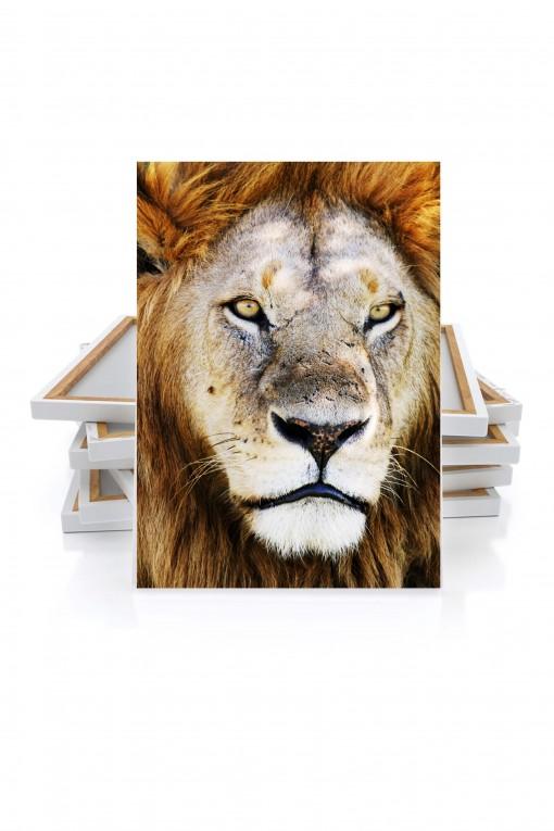 B. Canvas King Lion - Tanzania - By Emmanuel Catteau