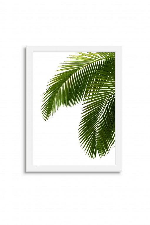 Poster with frame Leaves By Emmanuel Catteau
