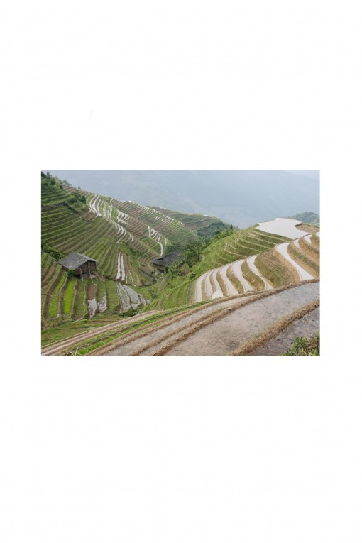 Poster Longji Rice Terraces - China - By Emmanuel Catteau