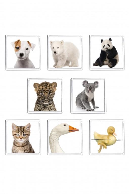 Set of 8 square magnets Animals