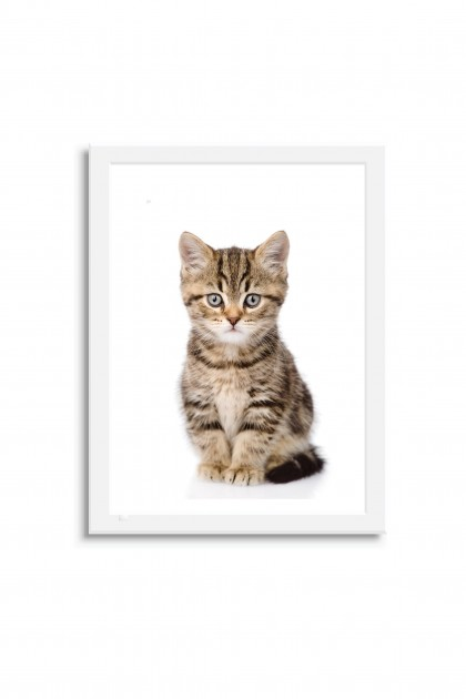 Poster with frame Baby Cat By Emmanuel Catteau