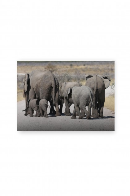 Canvas Elephants Namibia - By Emmanuel Catteau