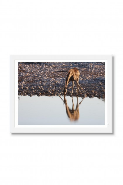 Poster with frame Girafe - Namibia By Emmanuel Catteau