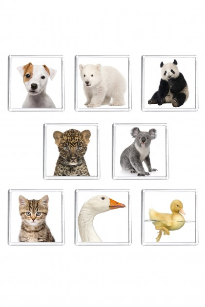 Set of 8 square magnets Animals