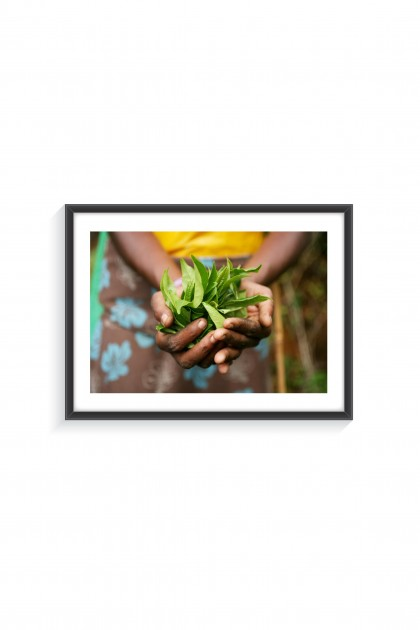 Poster with frame Tea Leaves - Sri Lanka By Emmanuel Catteau