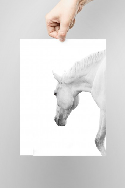 Poster White Horse By Emmanuel Catteau
