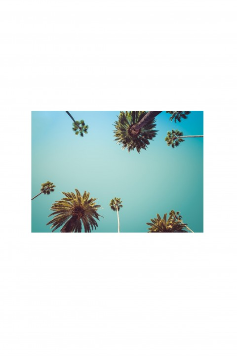 Poster Palm Trees In California - USA By Emmanuel Catteau