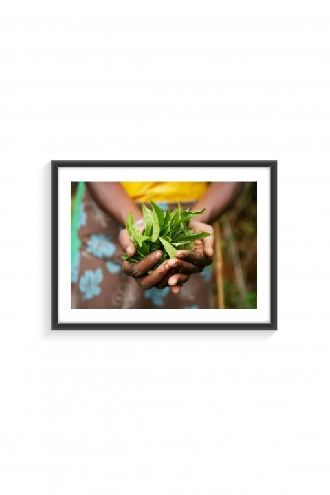 Poster with frame Tea Leaves - Sri Lanka By Emmanuel Catteau